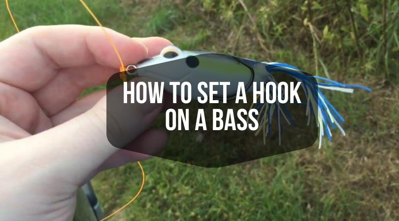 How-To-Set-a-Hook-on-a-Bass